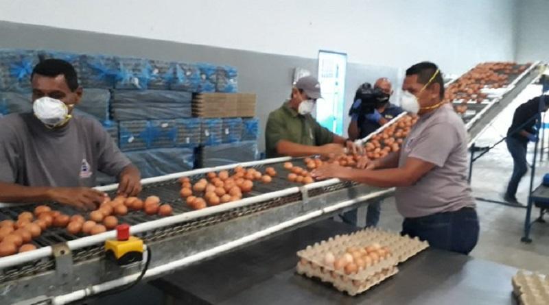 Zulia | Con apoyo de los CPT empresa Huevos La Rosa produce diario 520 cajas de este alimento